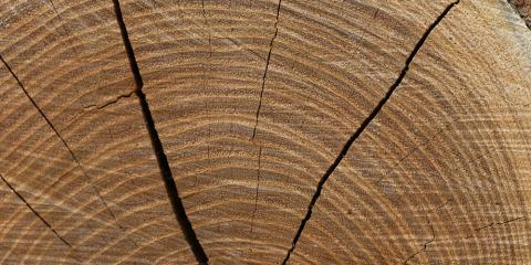 Tree Service Explains the Process of Stump Grinding, West Hartford, Connecticut