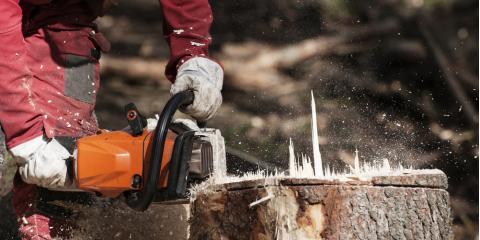 4 Reasons to Remove Tree Stumps Before Winter, Anchorage, Alaska