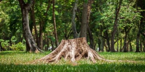 A Brief Guide to Why Stump Grinding Is Necessary, Anchorage, Alaska