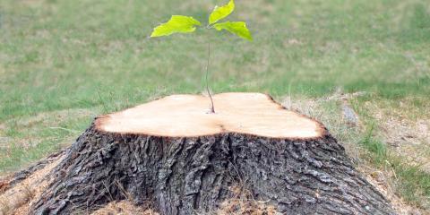 A Guide to Stump Grinding , Miamitown, Ohio