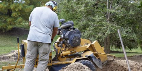 The Difference Between Stump Grinding & Removal, Seymour, Wisconsin
