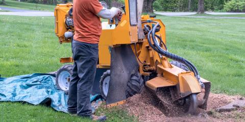 What to Know About Stump Grinding, Kalispell, Montana