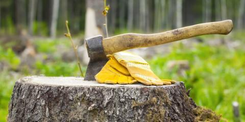 Why You Should Invest in Stump Grinding & Removal, Lincoln, Nebraska