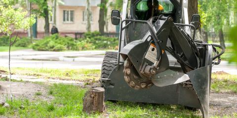 Stump Grinding vs. Chemical Stump Removal, Newburgh, New York