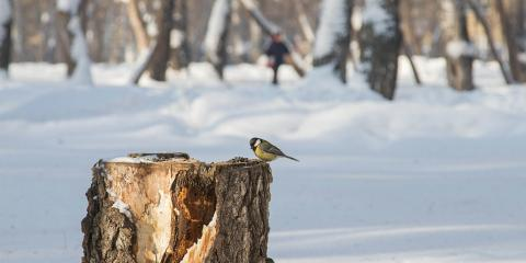 3 Dangers of an Exposed Stump in Winter, Anchorage, Alaska