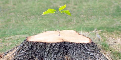 4 Reasons to Schedule Stump Removal, Providence, North Carolina