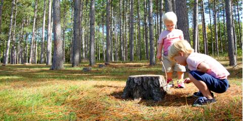 3 Reasons to Call a Professional for Stump Removal, Florence, Kentucky