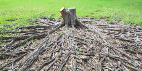 4 Signs It's Time to Schedule a Stump Removal Appointment, Clarksville, Texas