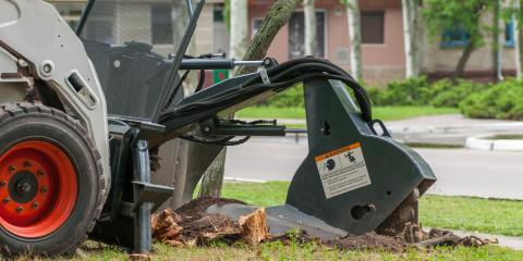 A Guide to Tree Stump Removal Services, Miamitown, Ohio