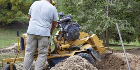 What's the Difference Between Stump Removal & Stump Grinding?, Florence, Kentucky