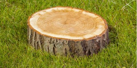4 Reasons for Tree Stump Removal, Baldwin, Georgia
