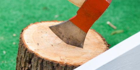 4 Signs You Need Tree Stump Removal, Milton, Pennsylvania