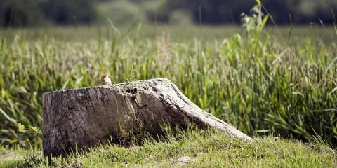 3 Reasons to Use Professional Stump Removal Services in West Hartford, West Hartford, Connecticut