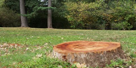 5 Reasons to Opt for Tree Stump Removal, Seymour, Connecticut
