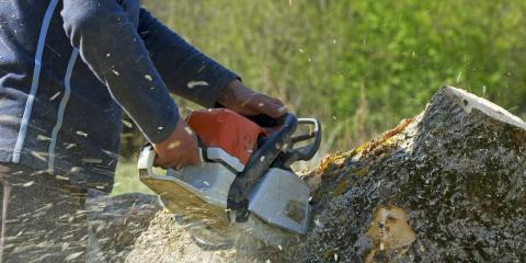 3 Reasons Why You Need Stump Removal, Miamitown, Ohio