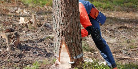 Should You Get Stump Grinding or Removal?, Anchorage, Alaska