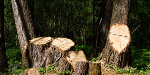 Why You Should Hire a Stump Removal Company to Remove Your Stump , Millersport, Ohio