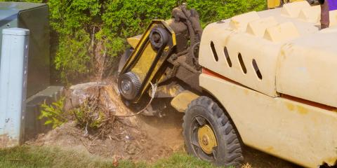 3 Reasons to Remove Your Yard's Tree Stump, De Motte, Indiana