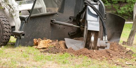 3 Reasons to Perform Stump Grinding on Rejuvenating Trees, Anchorage, Alaska