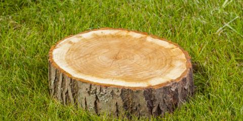 3 Reasons to Hire a Professional for Tree Stump Removal, Macedon, New York