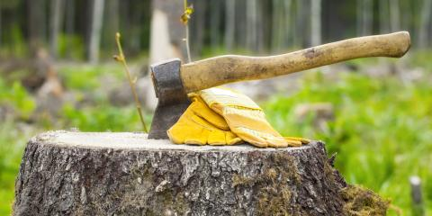 3 Reasons Families With Young Children Should Schedule Stump Removal, Newburgh, New York