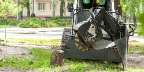 Which Is Better: Stump Grinding or Removal?, St. Charles, Missouri