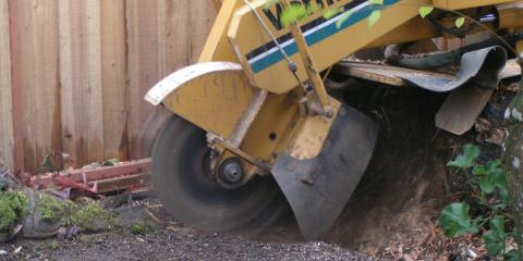 Pruning:Stump Grinding or Removal, Northwest Clackamas, Oregon