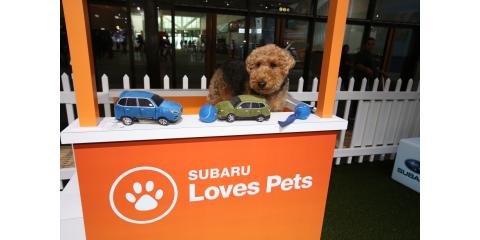 Learn how you can support Nutmeg Clinic during Subaru Loves Pets throughout month of October! #subarulovespets, Stratford, Connecticut