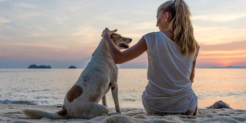 3 Steps to Prepare for a Beach Vacation With Your Canine, Orange Beach, Alabama
