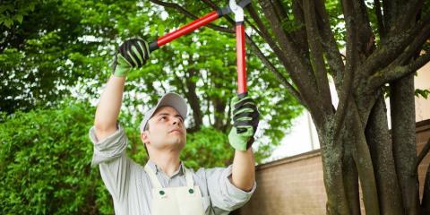 5 Reasons to Hire an Arborist, Summerdale, Alabama
