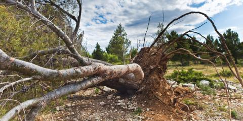 5 Signs You Need a Tree Removal Service , Summerdale, Alabama