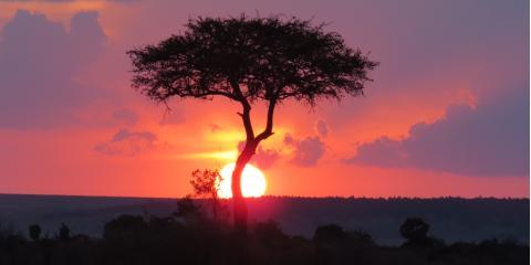 Sharing Our Kenyan Safari Vacation With You!, Pittsford, New York