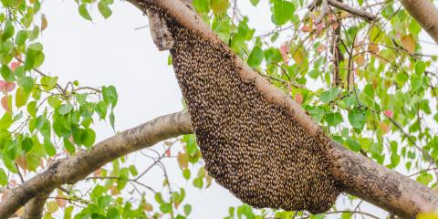 4 Steps to Take If You've Disturbed a Beehive, Las Vegas, Nevada