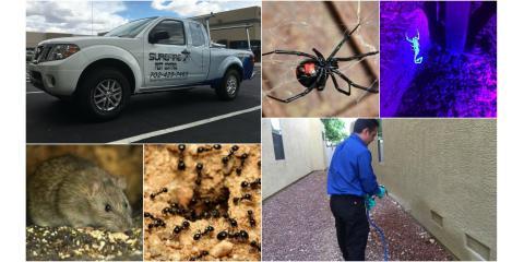 Surefire Pest Control, Pest Control, Services, Las Vegas, Nevada