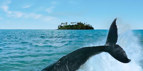 Maui's Leading Sports Rental Business Shares Advice for Whale Watching, Lahaina, Hawaii