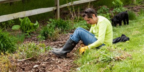5 Weed Removal Tips, Sutter Creek, California