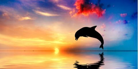 Dolphin Tour Guide: 5 Fun Facts About Wild Dolphins, Honolulu, Hawaii