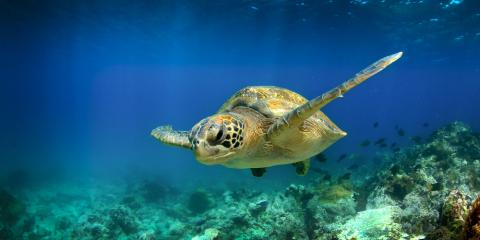 5 Fascinating Facts to Know if You Hope to Swim With Turtles , Honolulu, Hawaii