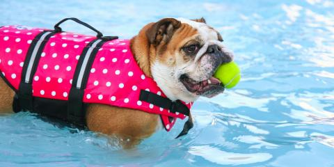 5 Helpful Tips to Keep Your Pets Safe in Swimming Pools, Kihei, Hawaii