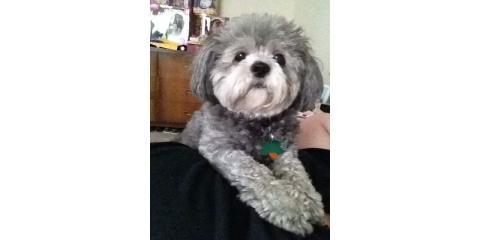 Puppy Wellness Plan, ,