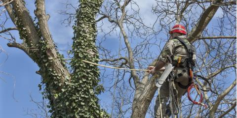 3 Reasons to Hire Tree Pruning Professionals, Macedon, New York