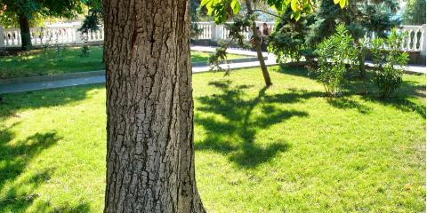 3 Common Tree Problems to Look For, Macedon, New York