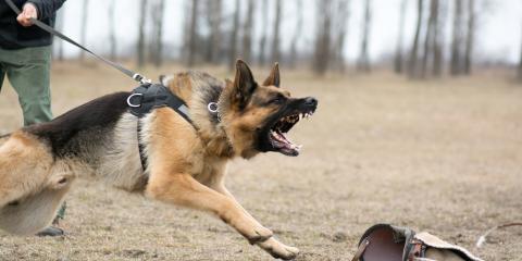 How Long Will My Dog Bite Case Take to Resolve?, Tacoma, Washington