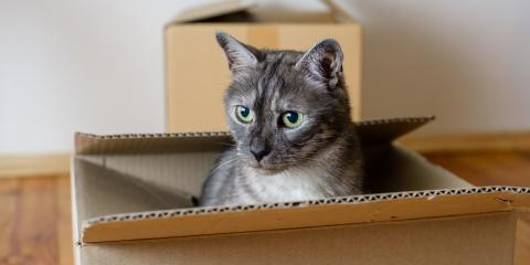 5 Helpful Tips for Moving With a Skittish Cat, Puyallup, Washington