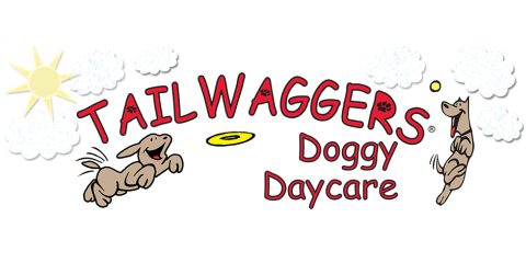 Tailwaggers Doggy Daycare Cincinnati Eastgate In