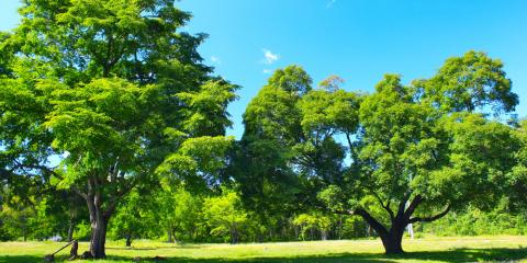 Need Hard-To-Reach Tree Removal? Call Alton Tree Services First, West Hartford, Connecticut