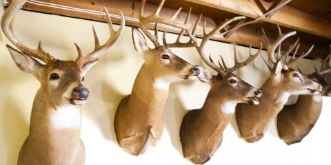 Top 3 Things You Never Knew About Taxidermy, Loveland, Ohio