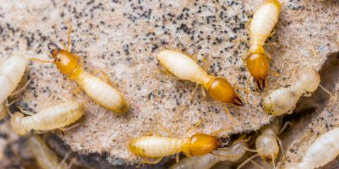 4 Things Your Exterminator Checks for During Your Termite Inspection, Union, Ohio
