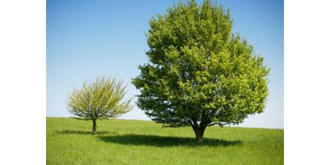 Summer Tree Care Dos & Don'ts From Cincinnati's Best Tree Company, Cincinnati, Ohio