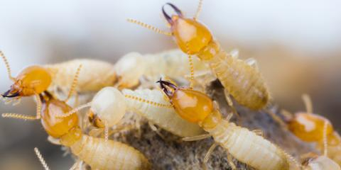 3 Best Practices for Effective Termite Control, Charlotte, North Carolina